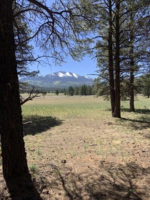 A view of the Kachina Peaks from the Kendrick Watchable Wildlife Trail in Flagstaff AZ