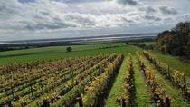 A vineyard in Autumn England