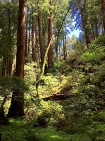A walk in Muir Woods National Monument