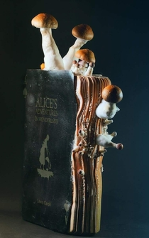 A water-damaged copy of Alice in Wonderland which grew fungi