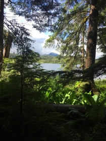 A week ago a federal court blocked the sale of timber from the Tongass National Forest in Alaska As a toast heres a photo I took during my visit