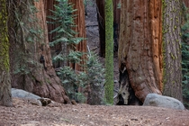A wide range of sizes - Sequoia NP