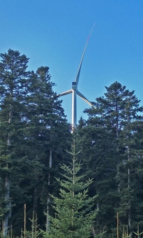 A windmill in a forest