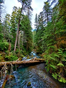A Winter Hike around the Big Quilcene River Jefferson County WA
