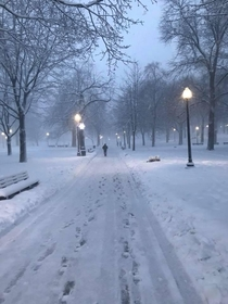 A winter walk in the Boston Common