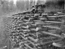 A wooden crib trestle on the Columbia and Nehalem Valley Railroad Oregon c-