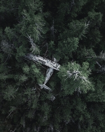 Abandoned airplane lost in the green woods