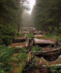 Abandoned American vehicles in a Belgian forest Still there to this day