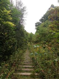 Abandoned and Overgrown track in Toronto Canada
