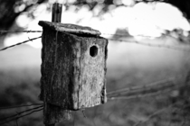 Abandoned birdhouse I found near an orchard in BeltonMO