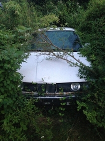 Abandoned BMW  series I found will wondering around the woods in Denmark