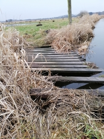 Abandoned bridge in Danish wetlands