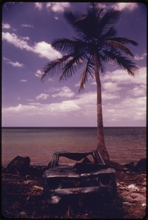 Abandoned Car Under a Palm Tree at Rincn Puerto Rico  Photo by John Vachon