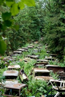 Abandoned cars in the Ardennes left by US servicemen after WWII