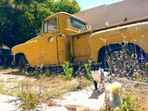 Abandoned  Chevy truck