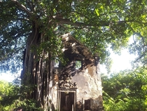 Abandoned church being held up by tree in Paraiba Brasil x