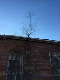Abandoned clothing factory in the USA fully equipped with a gutter tree