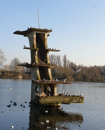 Abandoned diving platform in the middle of a lake x