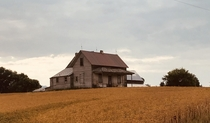 Abandoned farm house in a safflower field Late summer Taken on a bike ride