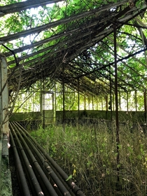 Abandoned greenhouse in Ontario Canada