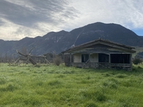 Abandoned haunted house and tree Takaka New Zealand  lovers died here