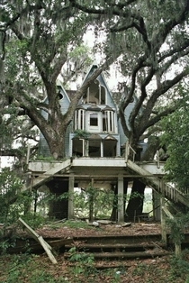 Abandoned house Would be so cool to renovate and incorporate the trees growing through it
