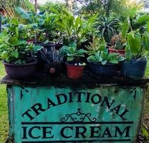 Abandoned ice cream cart that was turned into a plant table in Cozumel Mexico