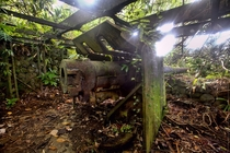 Abandoned Japanese artillery found in the Jungle of Micronesia left over from WW Photo by Jezsik