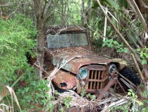 Abandoned Jeep I found in the woods when hiking on my dads property out in the swamp in Florida