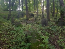 Abandoned jewish cementery in Bdzin Poland