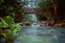 Abandoned Jungle Bridge in the Philippines