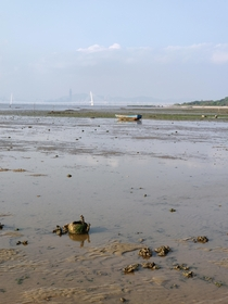 Abandoned kettle in the mudflat in Hong Kong