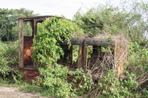 Abandoned locomotive Commewijne - Suriname