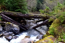Abandoned logging road bridge