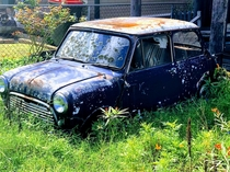Abandoned mini in the front yard Brisbane Aus