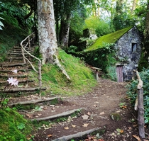 Abandoned mossy Mill Azores x