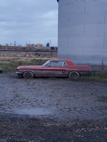 Abandoned mustang from the midwest floods