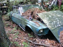 abandoned Mustang junkyard found in Rhode Island link in comments
