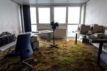 Abandoned office found with lots of moss and mold