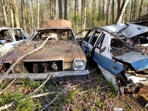 Abandoned police cars in a forest in Maryland more pictures in comments
