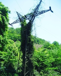 Abandoned power transmission tower covered with ivy Abkhazia