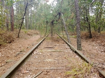 Abandoned rail line in the Pine Barrens Chatsworth NJ