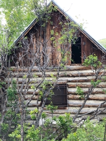 Abandoned ranchers cabin near Basalt Co