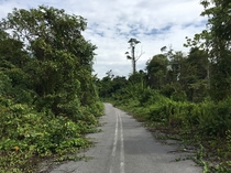 Abandoned road eaten by the weeds  Mulu Sarawak Malaysia