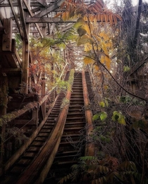 Abandoned Roller coaster looks like its turned into a nature ride