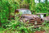 abandoned s Dodge truck being overtaken by kudzu in Florida