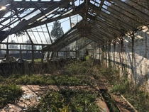 Abandoned s greenhouse