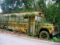 Abandoned school bus cultivates moss on the side of the road in Puerto Rico
