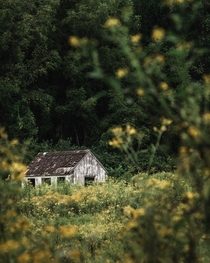 Abandoned shed in the woods taken over by yellow flowers