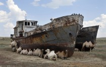 Abandoned ships in Kazakhstans Aral Sea are still very useful